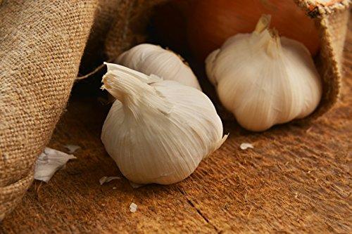 German Exra HardyGarlic, (3 Garlic Bulbs) Organic Hardneck 4-7 red cloves per head with ivory-white skin Vigorous and productive