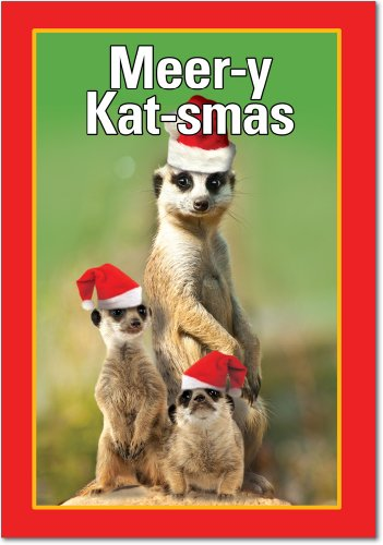 12 'Merry Katsmas' Hilarious Boxed Greeting Cards 4.63 x 6.75 inch, Merry Xmas Note Cards for Holidays, Gifts, Funny Animal Humor, Notecard Stationery w/Envelopes B5970