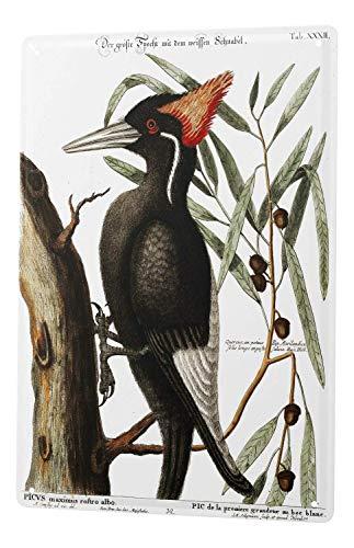 (New Bird Woodpecker 8