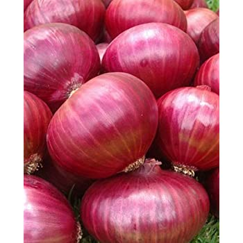 Onion RED Creole Great Heirloom Vegetable 300 Seeds