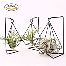 Metal Air Plant Stand Holder Tabletop Plant Hanger Air Plant Rack Tillandsia Air Plant Holder Freestanding Hanging Planter for Home Decor Or Office Desk, Iron, Black,Set of 3