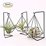 HYNEWHOME Metal Air Plant Stand Holder Tabletop Plant Hanger Air Plant Rack Tillandsia Air Plant Holder Freestanding Hanging Planter for Home Decor or Office Desk, Iron, Black,Set of 3