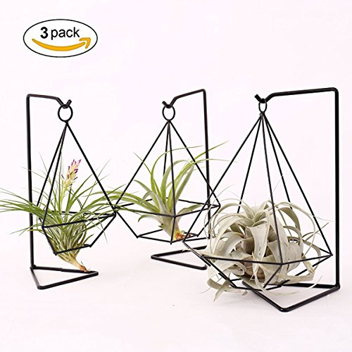 HYNEWHOME Metal Air Plant Stand Holder Tabletop Plant Hanger Air Plant Rack Tillandsia Air Plant Holder Freestanding Hanging Planter for Home Decor or Office Desk, Iron, Black,Set of 3 by HYNEWHOME