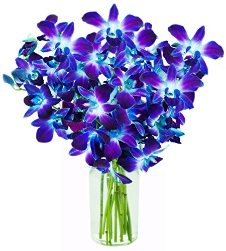 KaBloom Exotic Blue Sapphire Orchid Bouquet of 10 Fresh Blue Dendrobium Orchids from Thailand with Vase by KaBloom