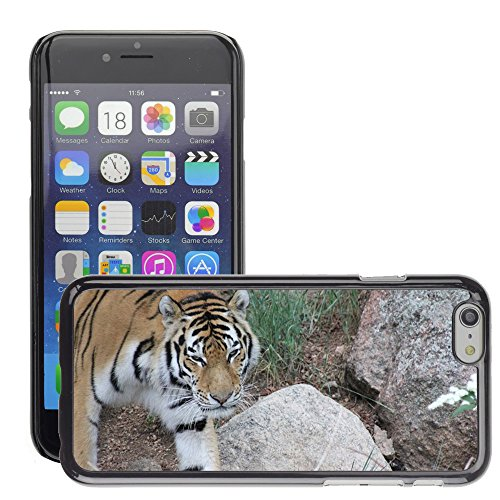 """Bild Hart Handy Schwarz Schutz Case Cover Schale Etui // M00134671 Tiger wildes Tier Wildkatze // Apple iPhone 6 PLUS 5.5"""""""