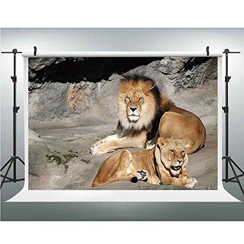 Wildcats Collapsible (Photo Studio,Zoo,Muslin Collapsible Backdrop Background for Photography, Video and Television,10x20ft,Male and Female Lions Basking in The Sun Wild Cats Habitat King of Jungle)