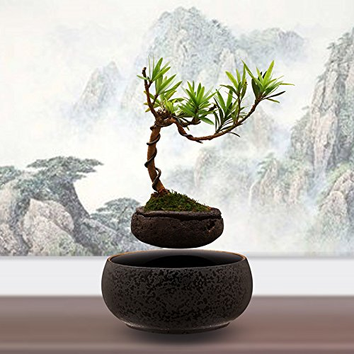 Levitating Bonsai Tree