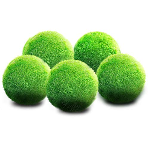 "Luffy 6 Nano Moss Balls - 0.6"" Marimo for Community Fish Tanks - Absorbs Nitrates & Provides Oxygen in Aquarium: Needs Minimal Care: Perfect for Neon, Tetra, Guppies, Playts & Molly from Luffy"