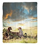 Chaoran 1 Fleece Blanket on Amazon Super Silky Soft All Season Super Plush Safari Decor Collection Two Cheetahs Africa Nature Grass Dangerous Animals Hunters Rainy Weather Picture Fabric et Ivory