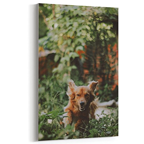 Vase Papillon (Westlake Art Dog Breed - 5x7 Canvas Print Wall Art - Canvas Stretched Gallery Wrap Modern Picture Photography Artwork - Ready to Hang 5x7 Inch)