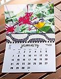 2018 Wall Calendar (The Real Backyard Birds of Rio de Janeiro)
