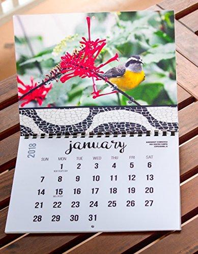 2018 Wall Calendar (The Real Backyard Birds of Rio de Janeiro) by Real Bird Calendars