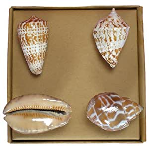 Unique Shell Drawer Pulls - Set of 4