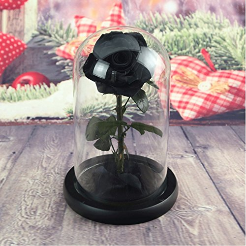 Preserved Fresh Flower, Live Forever Rose, Enchanted Rose,Natural Eternal Life Rose in Glass Dome Cover with Gift Box for Valentine's Day, Mother's Day, Anniversary, Birthday, wedding (black)