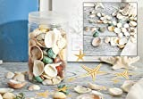 Famoby Sea Shells Mixed Beach Seashells Starfish