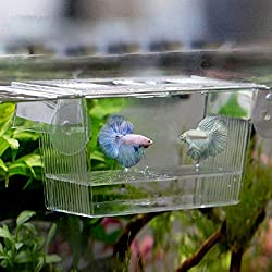 Fish Breeding Box - 1 Piece 728 ml Transparent Fish Breeding Box Aquarium Breeder Box Guppies Hatching Double Layer Self Floating Incubator