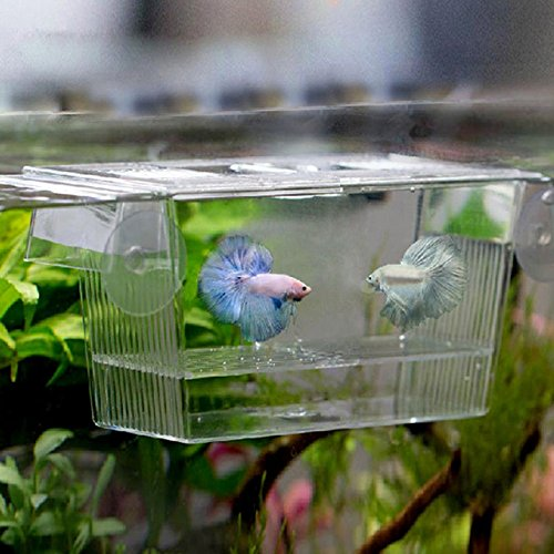 Fish Breeding Box - 1 Piece 728 ml Transparent Fish Breeding Box Aquarium Breeder Box Guppies Hatching Double Layer Self Floating Incubator by Unknown
