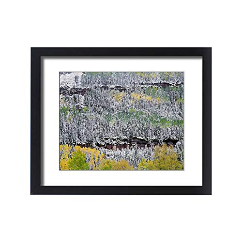 - Media Storehouse Framed 20x16 Print of Forest in Snow, San Juan Range Mountains, Uncompahgre National (18247093)