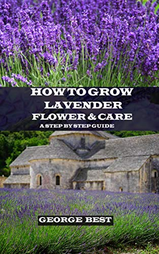 How To Grow Lavender Flower And Care A Step By Step Guide