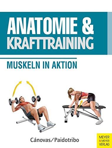 Anatomie Und Krafttraining  Anatomie And Sport Band 1   Muskeln In Aktion