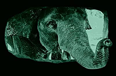 Startonight 3D Mural Wall Art Photo Elephant Amazing Dual View Surprise Large 32.28 inch By 59.06 inch Wall Mural Wallpaper for Living or Bedroom Animal Collection Wall Art