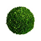 Mills Floral Preserved Boxwood Ball 16''