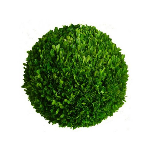 Mills Floral Preserved Boxwood Ball 16""