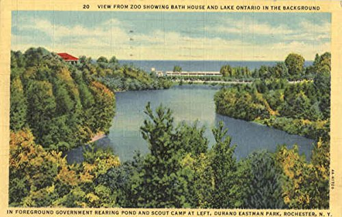 Eastman Park - View from Zoo Showing Bath House and Lake Ontario in the Background, Durand Eastman Park Original Vintage Postcard