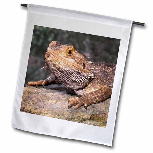 "3dRose fl_83699_2 ""Bearded Dragon Lizard Na02 Cad0036 Cla..."