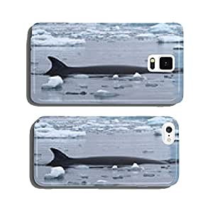 spin and fin whale Minke which surfaced in Antarctic waters cell phone cover case Samsung S6