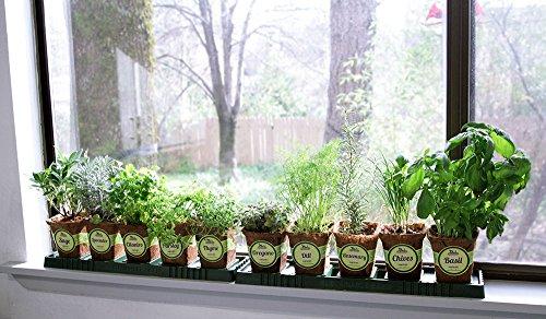 The 8 best herb gardens