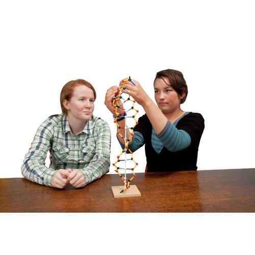 Orbit SEL1014 DNA-RNA Model Scientific Laboratory Supplies Ltd