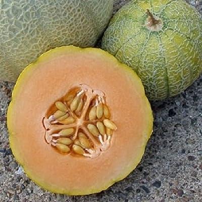 HeirloomSupplySuccess 15 Heirloom Minnesota Midget Melon Seeds : Garden & Outdoor