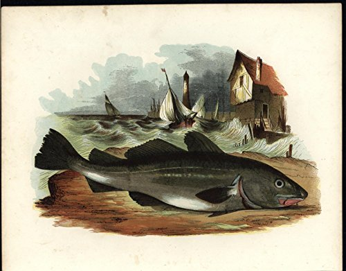 Fish Fishing Town Rough Waves Harbor Scene 1859 scarce great old color print