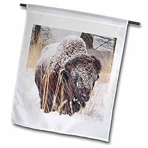 Danita Delimont - Bison - Bison bull in snowstorm at Yellowstone National Park - US51 CHA0062 - Chuck Haney - 12 x 18 inch Garden Flag (fl_97264_1)
