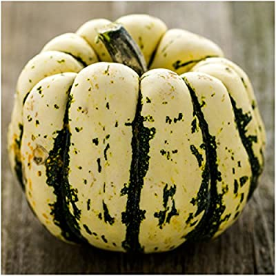 Package of 45 Seeds, Sweet Dumpling Winter Squash (Cucurbita pepo) Non-GMO Seeds by Seed Needs