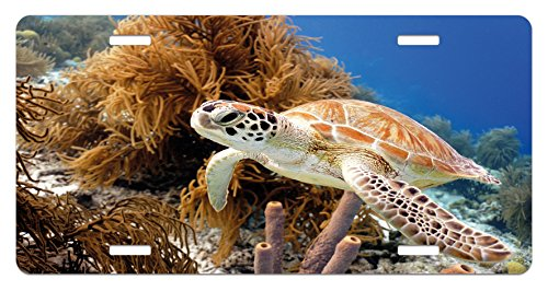 Reef License Plate - Ambesonne Turtle License Plate, Coral Reef and Sea Turtle Close up Photo Bonaire Island Waters Maritime, High Gloss Aluminum Novelty Plate, 5.88