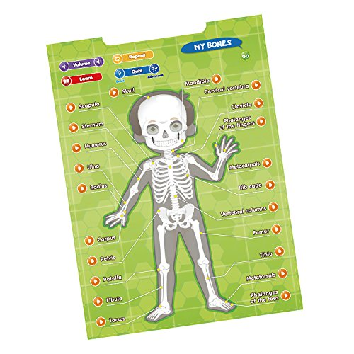 BEST LEARNING i-Poster My Body - Interactive Educational Human Anatomy Talking Game Toy System to Learn Body Parts, Organs, Muscles and Bones for Kids Aged 5 to 12 by BEST LEARNING (Image #4)