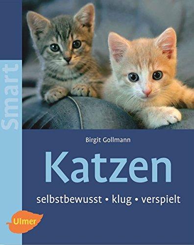 katzen-selbstbewusst-klug-verspielt-smart