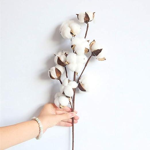 Planta de algodón seco para decoración de flores artificiales, rama de algodón, decoración para el hogar, fiestas, bodas: Amazon.es: Hogar