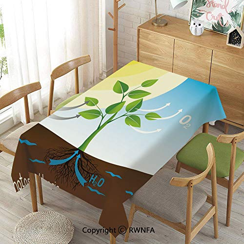 Homenon Tablecloth for Dining Room for Rectangle Tables,Simple Photosynthesis Scheme Plant Sun Molecules Chemical Chain Growth Ecology Decorative,Machine Washable,Multicolor,52