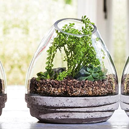 Glass Dome Terrarium With Base Amazon Co Uk Kitchen Home