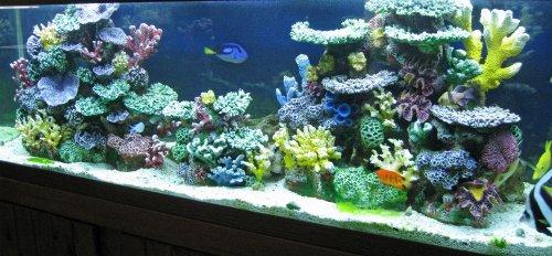 Amazon Com Instant Reef Dm058 Fish Tank Decorations Aquarium