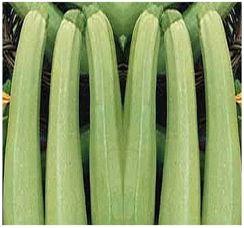 ZUCCHINI BIANCO DI TRIESTE ZUCCHINI - Club Shaped With Creamy White Flesh ~ HALF LONG WHITE Squash Seed - excellent flavor - 40 - 50 Days (020 Seeds - 20 Seeds - Pkt. Size) ()