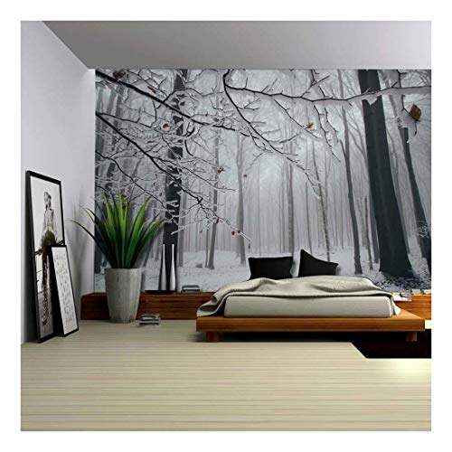 Close Up View of a Forest in The Winter Time Wall Mural