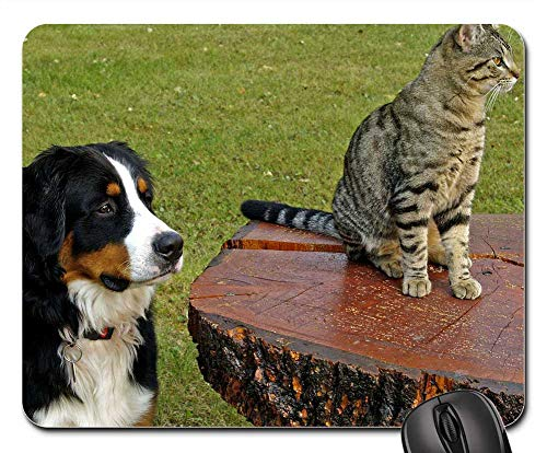 Mouse Pad - Bernese Mountain Dog Canine Tabby Striped Cat