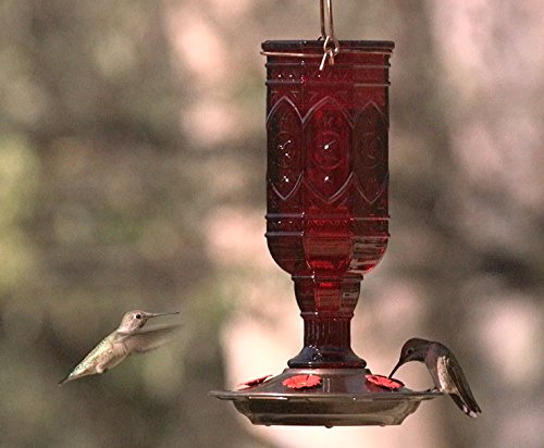 Buy hummingbird feeder best