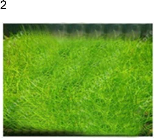 Amazon Com Gsdviyh36 10g Water Grass Seeds Cow Hair Plants Fish