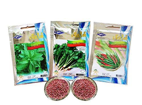 3-kinds-of-thailand-herb-vegetable-popular-variety-seeds-to-grow-sweet-basil-coriander-bird-chili