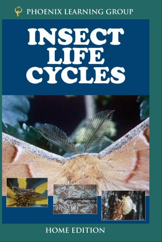 Insect Life Cycles (Home Use)